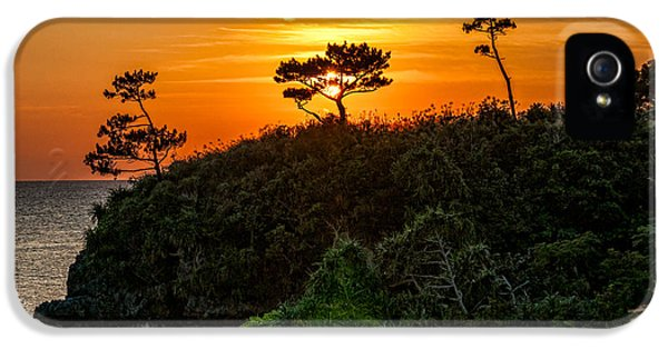Christopher Holmes Photography iPhone 5 Cases - Sunset in the Tree iPhone 5 Case by Christopher Holmes