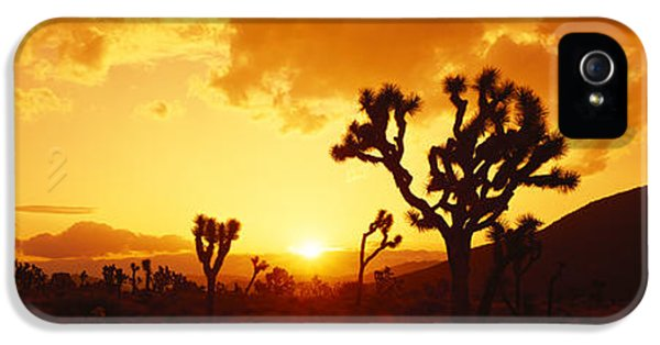 National Monuments iPhone 5 Cases - Sunset, Joshua Tree Park, California iPhone 5 Case by Panoramic Images