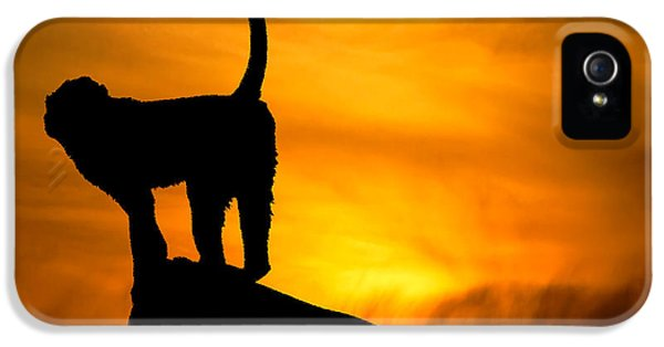 Striking iPhone 5 Cases - Monkey / Sunset iPhone 5 Case by Martin Newman