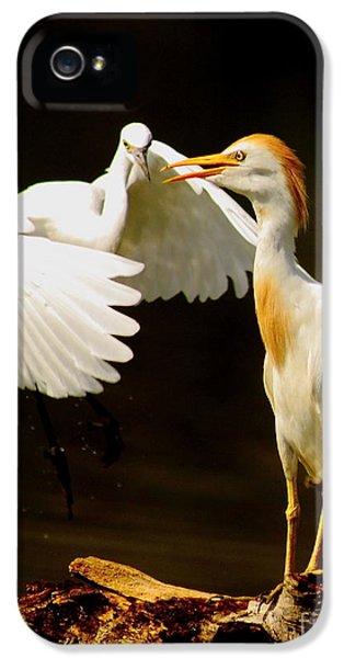 Bird Watcher iPhone 5 Cases - Suprised Cattle Egret iPhone 5 Case by Robert Frederick