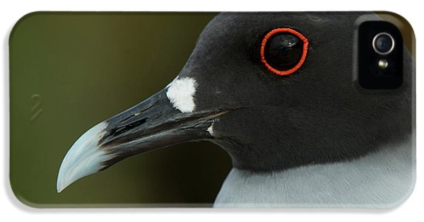 Swallow-tailed Gull (larus Furcatus IPhone 5 / 5s Case by Pete Oxford