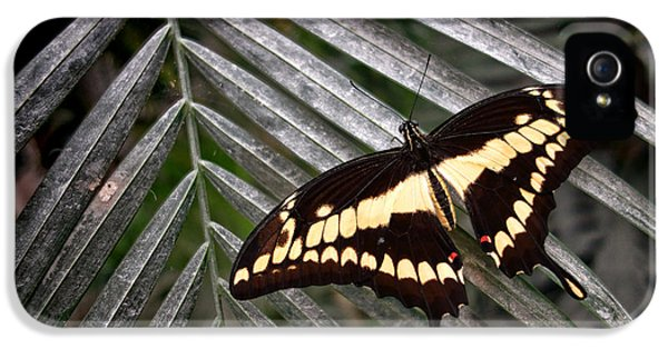 Swallowtail iPhone 5 Cases - Swallowtail Butterfly iPhone 5 Case by Olivier Le Queinec