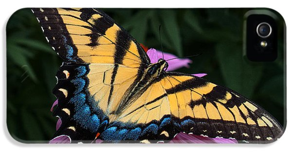Swallowtail  IPhone 5 / 5s Case by Don Spenner