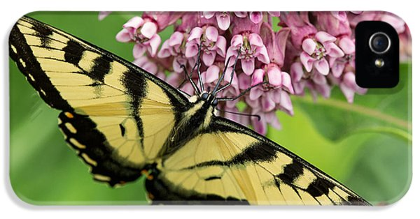 Swallowtail iPhone 5 Cases - Swallowtail notecard iPhone 5 Case by Everet Regal