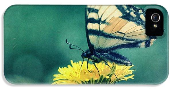 Swallowtail iPhone 5 Cases - Swallowtail iPhone 5 Case by Priska Wettstein