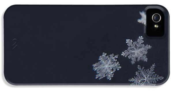 Winter iPhone 5 Cases - Sweet Snowflakes iPhone 5 Case by Carrie Ann Grippo-Pike