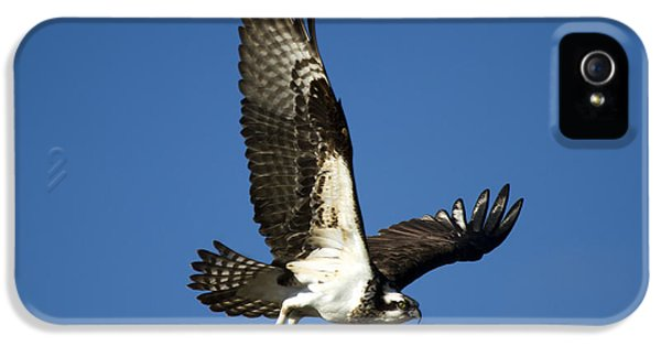 Take Flight IPhone 5 / 5s Case by Mike  Dawson