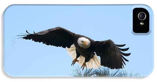 American Bald Eagle iPhone 5 Cases - Take to the Air iPhone 5 Case by Mike Dawson