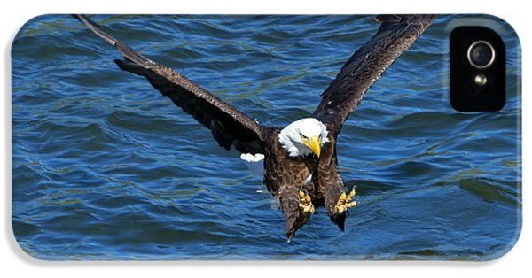 American Bald Eagle iPhone 5 Cases - Talons First iPhone 5 Case by Mike Dawson