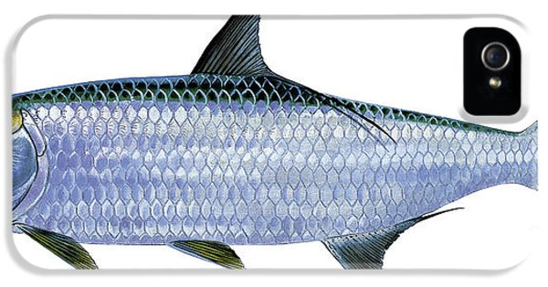 Tarpon IPhone 5 / 5s Case by Carey Chen