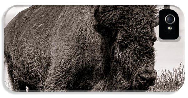 Roaming iPhone 5 Cases - Tatanka iPhone 5 Case by Olivier Le Queinec