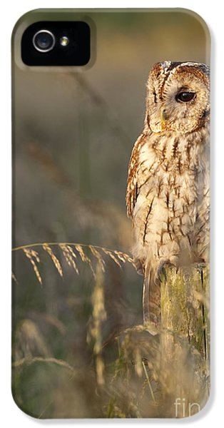 Aves iPhone 5 Cases - Tawny Owl iPhone 5 Case by Tim Gainey