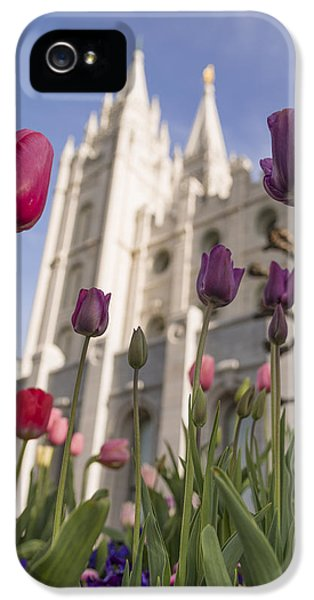 Pillar iPhone 5 Cases - Temple Tulips iPhone 5 Case by Chad Dutson