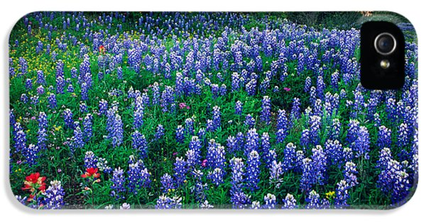 Lupine iPhone 5 Cases - Texas Bluebonnet Field iPhone 5 Case by Inge Johnsson