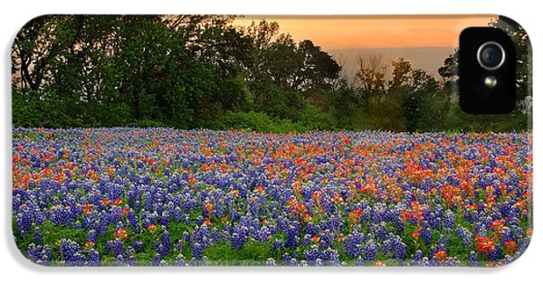 Bluebonnets iPhone 5 Cases - Texas Sunset - Bluebonnet Landscape Wildflowers iPhone 5 Case by Jon Holiday