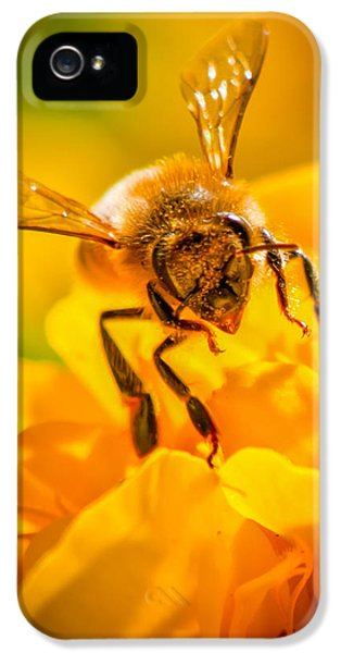 Bee iPhone 5 Cases - The Bee gets its pollen iPhone 5 Case by Bob Orsillo