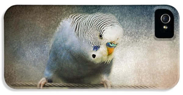 The Budgie Collection - Budgie 3 IPhone 5 / 5s Case by Jai Johnson