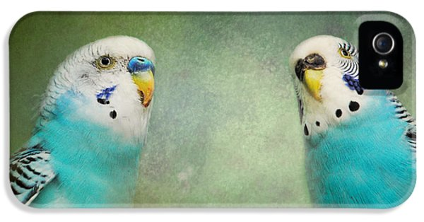 The Budgie Collection - Budgie Pair IPhone 5 / 5s Case by Jai Johnson