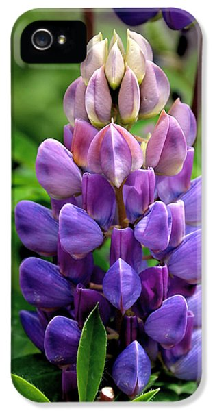 Bluebonnets iPhone 5 Cases - The Colors of Lupine iPhone 5 Case by Rona Black