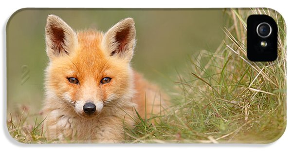 Fox Kits iPhone 5 Cases - The Cute Kit iPhone 5 Case by Roeselien Raimond