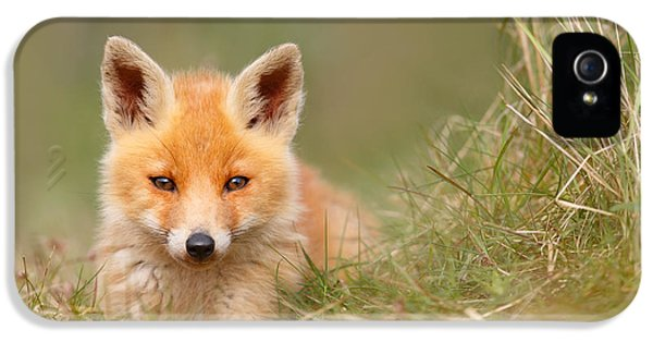 Young Foxes iPhone 5 Cases - The Cute Kit iPhone 5 Case by Roeselien Raimond
