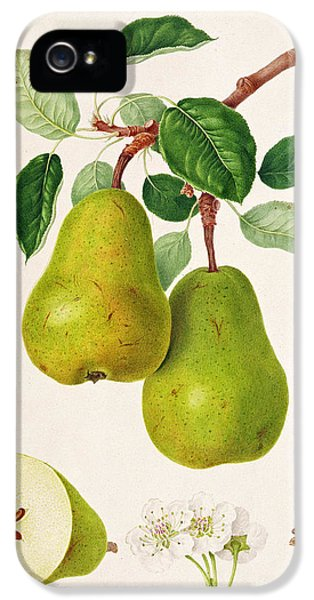 The D'auch Pear IPhone 5 / 5s Case by William Hooker