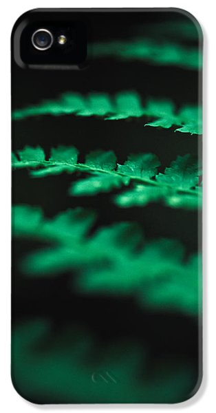 Fern iPhone 5 Cases - The Delicate Nature Of Ferns iPhone 5 Case by Shane Holsclaw