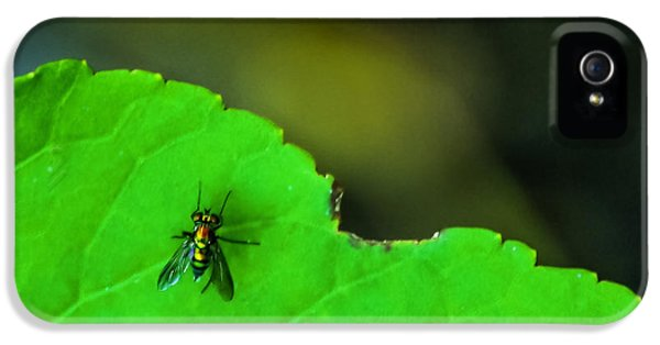 Bug iPhone 5 Cases - The Fly iPhone 5 Case by Marvin Spates
