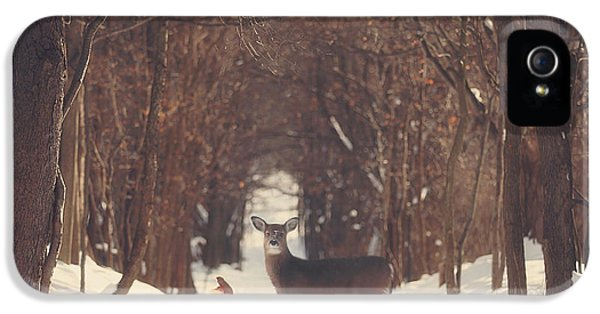 Winter iPhone 5 Cases - The Forest of Snow White iPhone 5 Case by Carrie Ann Grippo-Pike