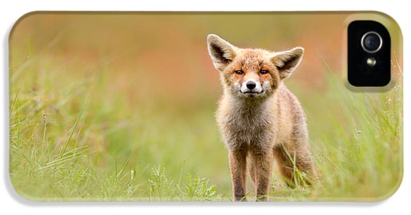 Juvenile iPhone 5 Cases - The Funny Fox Kit iPhone 5 Case by Roeselien Raimond