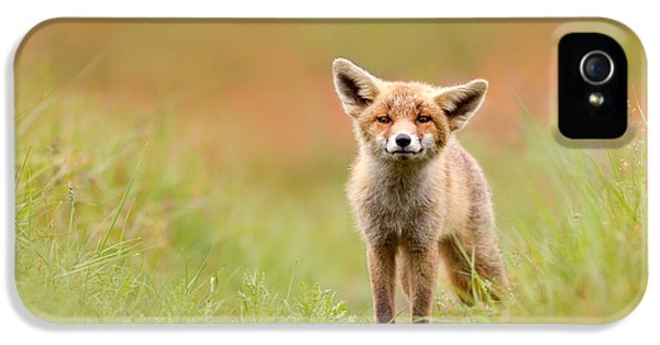 Young Foxes iPhone 5 Cases - The Funny Fox Kit iPhone 5 Case by Roeselien Raimond