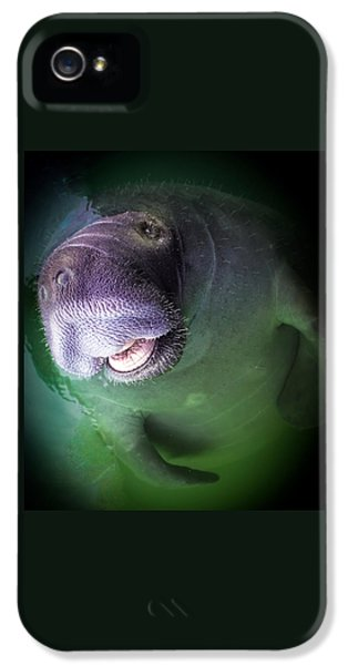 Playful iPhone 5 Cases - The Happy Manatee iPhone 5 Case by Karen Wiles