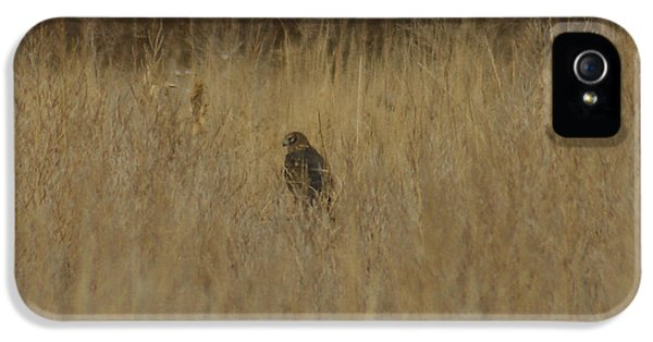 Redtail iPhone 5 Cases - The Hawk 2 iPhone 5 Case by Ernie Echols