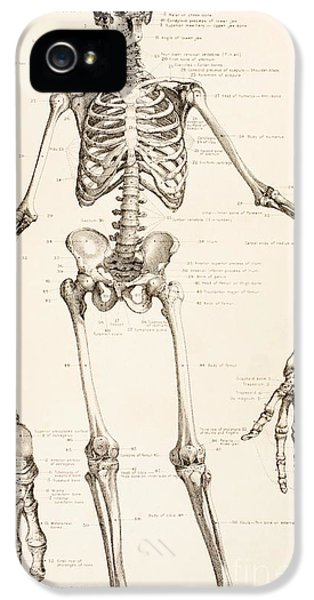 The Human Skeleton IPhone 5 / 5s Case by English School