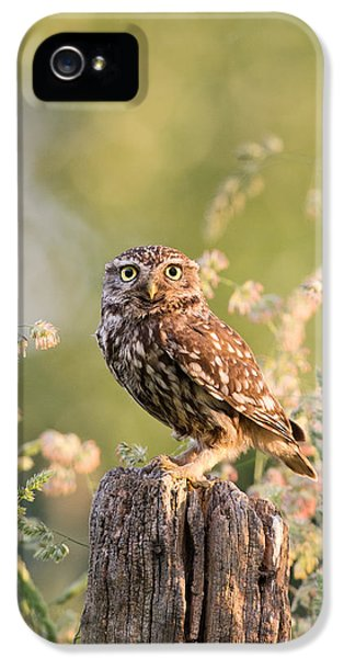 Farmland iPhone 5 Cases - The Little Owl iPhone 5 Case by Roeselien Raimond