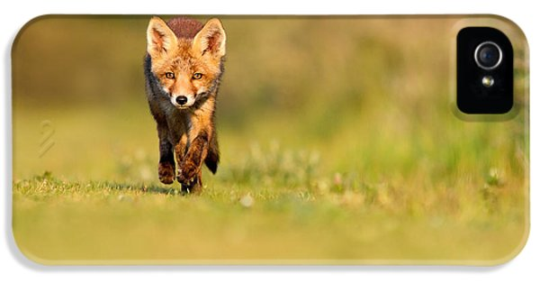 Fox Kits iPhone 5 Cases - The New Kit on the Grass - Red Fox Cub iPhone 5 Case by Roeselien Raimond