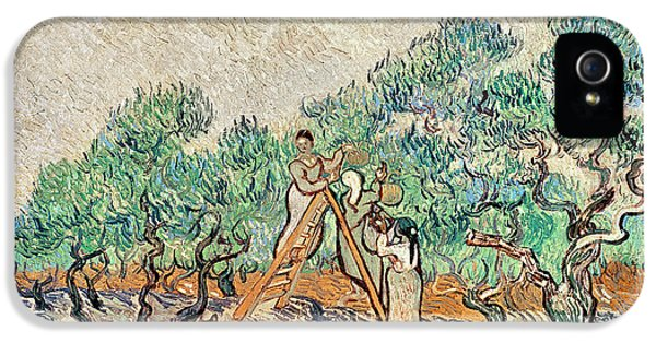 Ladder iPhone 5 Cases - The Olive Orchard, 1889 Oil On Canvas iPhone 5 Case by Vincent van Gogh