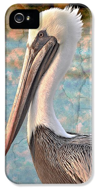 Beak iPhone 5 Cases - The Prince iPhone 5 Case by Debra and Dave Vanderlaan