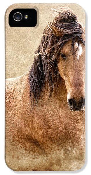 Equine iPhone 5 Cases - The Proud iPhone 5 Case by Ron  McGinnis