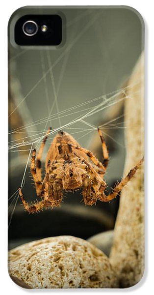 Abdomen iPhone 5 Cases - The Spectacular Spider I iPhone 5 Case by Marco Oliveira