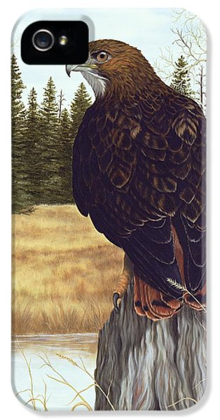 Red Tailed Hawk iPhone 5 Cases - The Watchful Eye iPhone 5 Case by Rick Bainbridge
