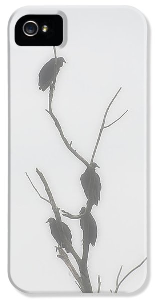 Their Waiting Four Black Vultures In Dead Tree IPhone 5 / 5s Case by Chris Flees