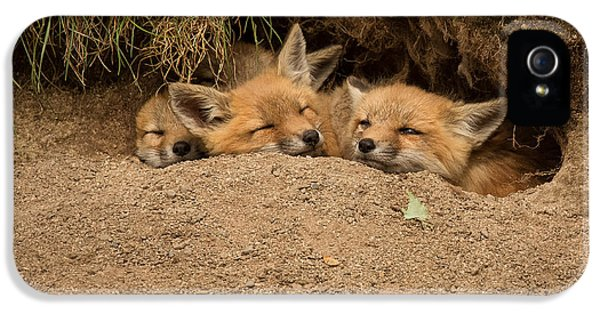 Fox Kits iPhone 5 Cases - Theres always room for more iPhone 5 Case by Everet Regal