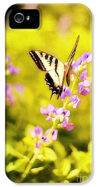 Summer iPhone 5 Cases - Those Summer Dreams iPhone 5 Case by Darren Fisher