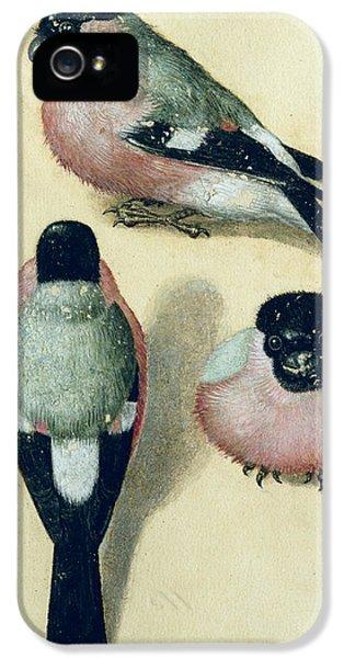 Three Studies Of A Bullfinch IPhone 5 / 5s Case by Albrecht Durer