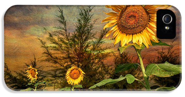 Hdr iPhone 5 Cases - Three Sunflowers iPhone 5 Case by Adrian Evans