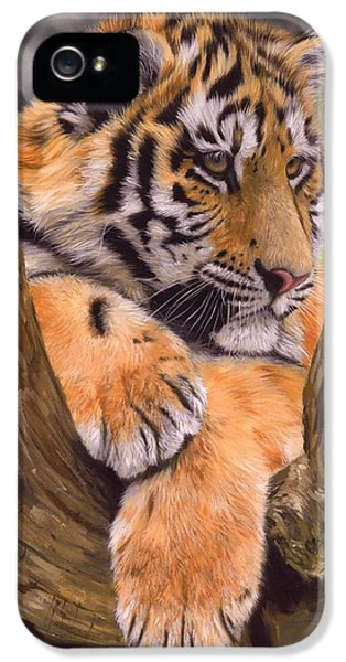 Cubs iPhone 5 Cases - Tiger Cub Painting iPhone 5 Case by David Stribbling