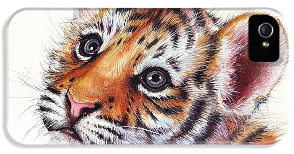 Cubs iPhone 5 Cases - Tiger Cub Watercolor Painting iPhone 5 Case by Olga Shvartsur