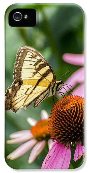 Cone Flowers And Butterflies iPhone 5 Cases - tiger striped butterfly vertical on Cone Flower iPhone 5 Case by Photographic Arts And Design Studio