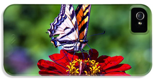 Softly iPhone 5 Cases - Tiger Tail On Red Flower iPhone 5 Case by Garry Gay